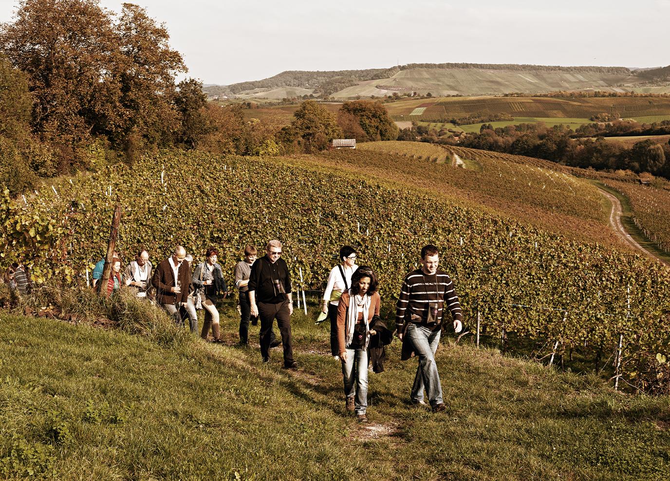 Einwanderung in den Weinbergen
